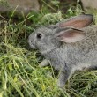 Beautiful little rabbit sitting in the grass outdoors — Stock Photo