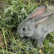 Beautiful little rabbit sitting in the grass outdoors — Foto de Stock