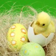 Little Easter basket with eggs and chicken on a green background — Стоковая фотография