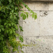 Stone wall decorated with green plants — Stock Photo #29233581