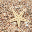 Starfish on the beach in the summertime — Stock Photo