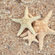 Star fish on sand background — Stock Photo