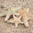 Three different sized starfish on the beach — Stock Photo