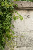 Stone wall decorated with green plants — Stock Photo