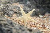 Exótica hermosa estrella de mar sobre una gran roca en el mar — Foto de Stock