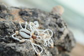 Sea inhabitants and treasures lie on a large rock on the seashore — Stock Photo