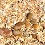Random wet round stones at the beach — Stock Photo #29246659