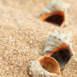 Background of the old sand and seashell long lain in the water — Stock Photo