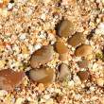 Random wet round stones at the beach — Stock Photo #29247025