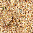 Sand background — Stock Photo #29247297