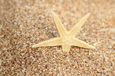 Starfish in the sand — Stock Photo