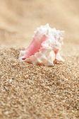 Sea, sand and shells — Stock Photo