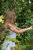 Little girl rips off apples from the tree — Stock Photo