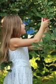 Little girl picks apples — Stock Photo