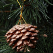 Golden pine cone — Stock Photo