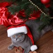 Cat under the Christmas tree — 图库照片