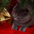 Cat investigating the decorations — Stock Photo