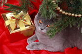 Gray cat with presents — Foto de Stock