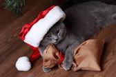 Chat britannique avec Bonnet de Noel — Photo