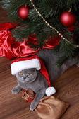 Gato bajo el árbol de navidad — Foto de Stock