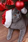 Cat under the Christmas tree — Stock Photo