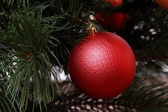Röd boll på julgran — Stockfoto