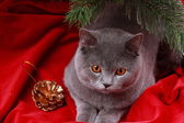 Cat under christmas tree — Stock Photo