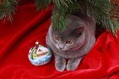 Katze unterm Tannenbaum — Stockfoto