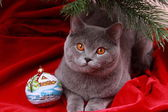 Cat under christmas tree — Stock Photo