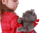 Girl holding British cat — Foto Stock