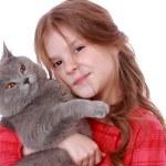 Girl holding British cat — Stock Photo