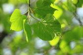 Doğal arka plan — Stok fotoğraf