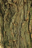 Old bark wooden background — Stock Photo