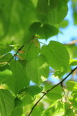 Beautiful nature background — Stock Photo