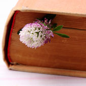 Flower between the pages of book — Stockfoto
