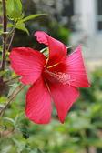 Lovely flower outdoor — Stock Photo