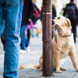Cute dog waiting patiently for his master on a city street - Stock Photo