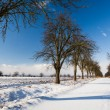 Lovely winter landcape - alley covered with fresh snow on a sunn — Stock Photo