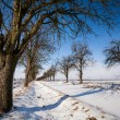 Lovely winter landcape - alley covered with fresh snow on a sunn — Stock Photo #17128667