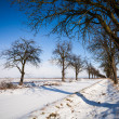 Lovely winter landcape - alley covered with fresh snow on a sunn — Stock Photo #17128669
