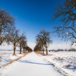 Lovely winter landcape - alley covered with fresh snow on a sunn — Stock Photo #17128681