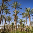 Oasis in the middle of a desert (Oman) - Stockfoto