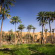Oasis in the middle of a desert (Oman) - Stock fotografie