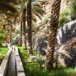 Oasis in the middle of a desert (Oman) - Lizenzfreies Foto
