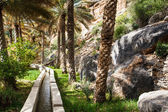 Oasis in the middle of a desert (Oman) — Stock Photo