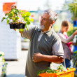 Senior man buying strawberry plants in a gardening centre - Foto de Stock  