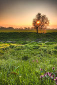 Lovely early morning spring scenery - sun rising over splendid — Stock Photo