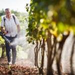 Vintner walking in his vineyard spraying chemicals on his vines — Stock Photo #23461554