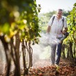 Vintner walking in his vineyard spraying chemicals on his vines — Stock Photo #23463550