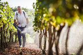 醸造業者は彼のブドウの化学物質を散布彼のブドウ畑を歩いて — ストック写真